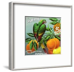 Pomona, California, The Parrot Brand Citrus Label by Lantern Press