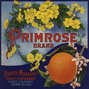 Primrose Brand - Duarte, California - Citrus Crate Label by Lantern Press