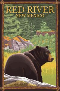 Red River, New Mexico - Black Bear in Forest by Lantern Press