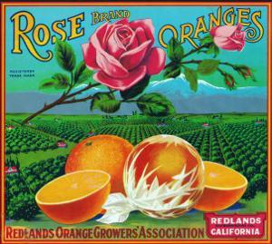 Redlands, California, Rose Brand Citrus Label by Lantern Press