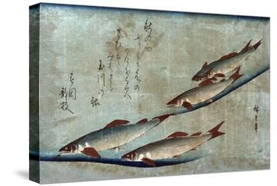 River Trout, Japanese Wood-Cut Print