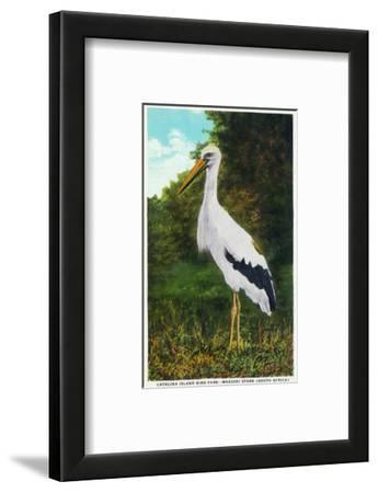 Santa Catalina Island, California - Bird Park, View of a Maguiri Stork
