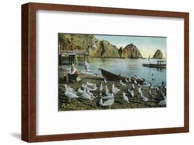 Santa Catalina Island, California - View of Sea Gulls at Avalon