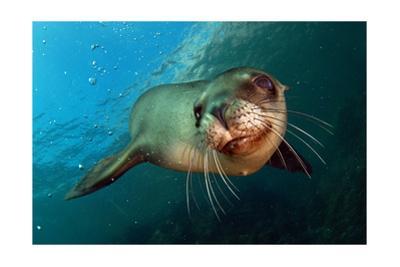 Seal Up Close