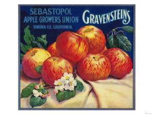 Sebastopol Gravensteins Apple Label - Sonoma, CA by Lantern Press