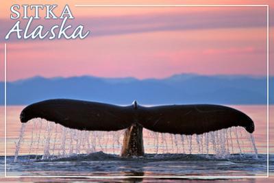 Sitka, Alaska - Humpback Fluke and Sunset