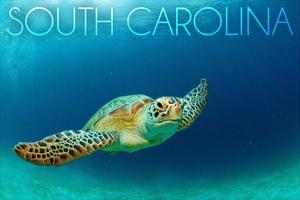 South Carolina - Sea Turtle by Lantern Press