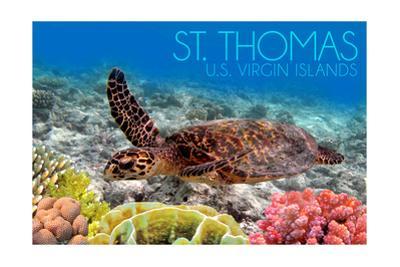 St. Thomas, U.S. Virgin Islands - Sea Turtle and Coral