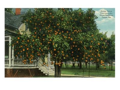 Tampa, Florida - Orange Trees in Front of House