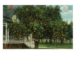 Tampa, Florida - Orange Trees in Front of House by Lantern Press