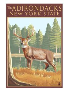The Adirondacks, New York State - White Tailed Deer Buck by Lantern Press