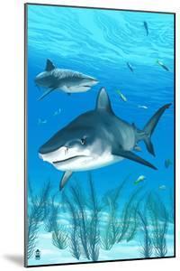 Tiger Shark by Lantern Press