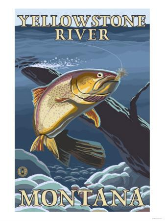 Trout Fishing Cross-Section, Yellowstone River, Montana by Lantern Press