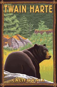 Twain Harte, California - Black Bear in Forest by Lantern Press