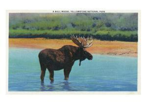 View of a Bull Moose Wading in Water, Yellowstone National Park, Wyoming by Lantern Press