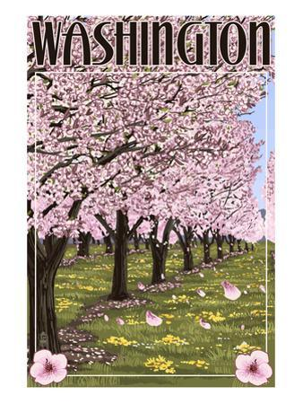 Washington - Cherry Blossoms