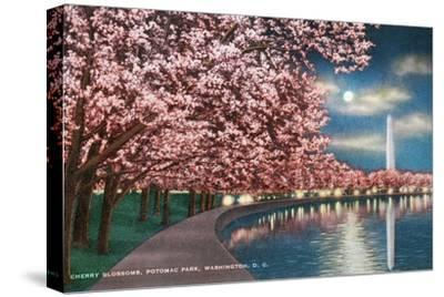 Washington DC, Potomac Park and Blossoming Cherry Trees Scene at Night