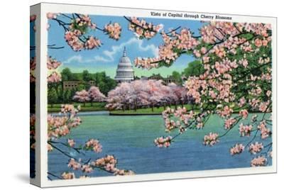 Washington DC, Vista of the Capitol through the Cherry Blossoms