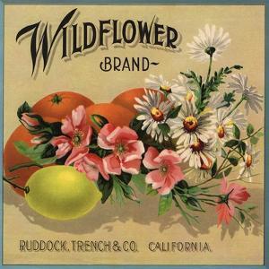 Wildflower Brand - Ruddock, California - Citrus Crate Label by Lantern Press