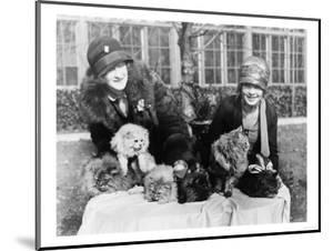 Women with their Persian Cats at Cat Show Photograph - Washington, DC by Lantern Press