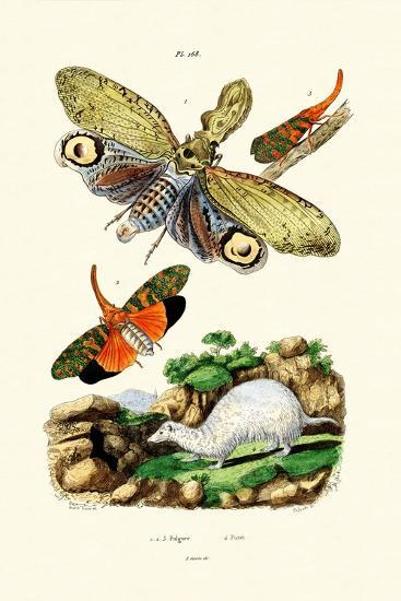Lanternfly, 1833-39--Giclee Print