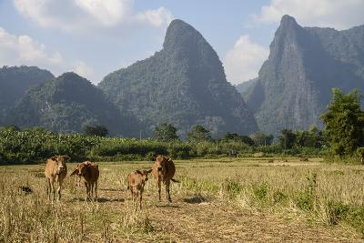 Laos, Vang Vieng. Cows and Mountains-Matt Freedman-Photographic Print