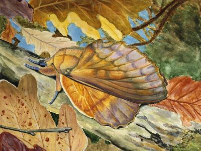 Lappet (Gastropacha Quercifolia), Lasiocampidae--Giclee Print