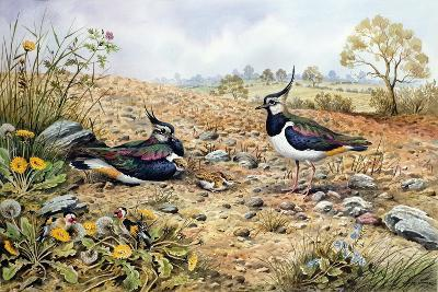 Lapwing Family with Goldfinches-Carl Donner-Giclee Print