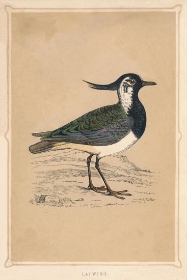 'Lapwing', (Vanellus vanellus), c1850, (1856)-Unknown-Giclee Print