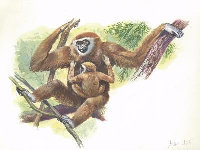 Lar Gibbon Hylobates Lar with a Young--Giclee Print