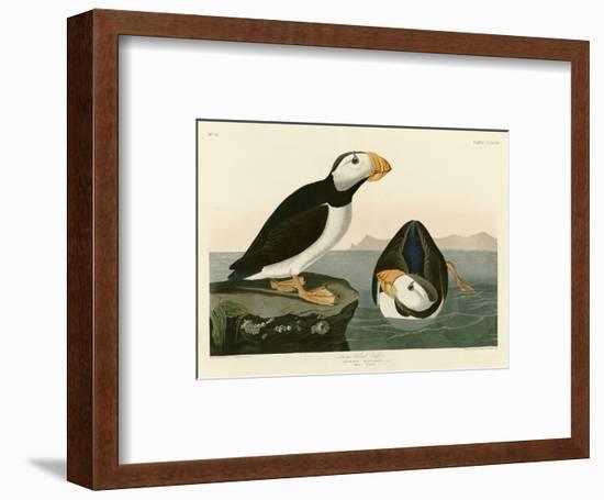 Large Billed Puffin-John James Audubon-Framed Premium Giclee Print