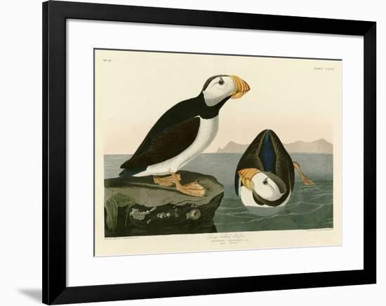 Large Billed Puffin-John James Audubon-Framed Giclee Print