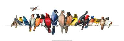 https://imgc.artprintimages.com/img/print/large-bird-menagerie_u-l-pfs5qb0.jpg?p=0