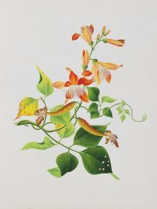 Large Bright Orange Flowers and Large Green Leaves