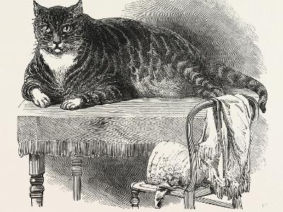 Large Cat--Giclee Print