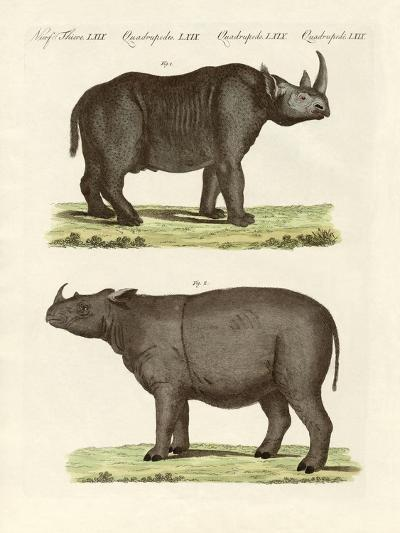Large Four-Footed Mammals--Giclee Print