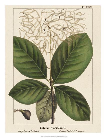 Large Leaved Cotinus-John Silva-Giclee Print