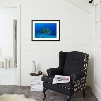 Design Bank Palau.Large Napoleon Wrasse In Blue Water Palau Micronesia Photographic Print By Stocktrek Images Art Com