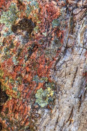 https://imgc.artprintimages.com/img/print/large-naturally-polished-rock-with-lichen-lower-deschutes-river-central-oregon-usa_u-l-q1gb65e0.jpg?p=0