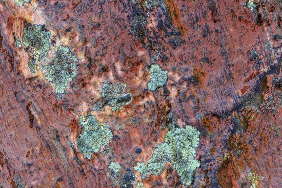 Large naturally polished rock with lichen, Lower Deschutes River, Central Oregon, USA-Stuart Westmorland-Photographic Print