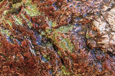 https://imgc.artprintimages.com/img/print/large-naturally-polished-rock-with-lichen-lower-deschutes-river-central-oregon-usa_u-l-q1gbkzu0.jpg?p=0