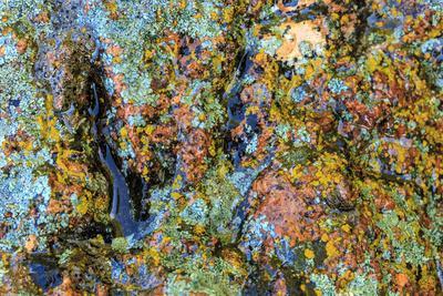 https://imgc.artprintimages.com/img/print/large-naturally-polished-rock-with-lichen-lower-deschutes-river-central-oregon-usa_u-l-q1gbmtt0.jpg?p=0