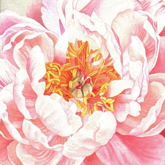 Large Peach Peony-Elizabeth Hellman-Art Print