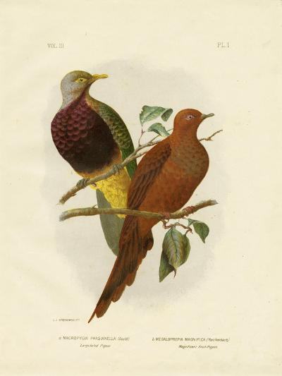 Large-Tailed Pigeon or Brown Pigeon or Brown Cuckoo-Dove, 1891-Gracius Broinowski-Giclee Print