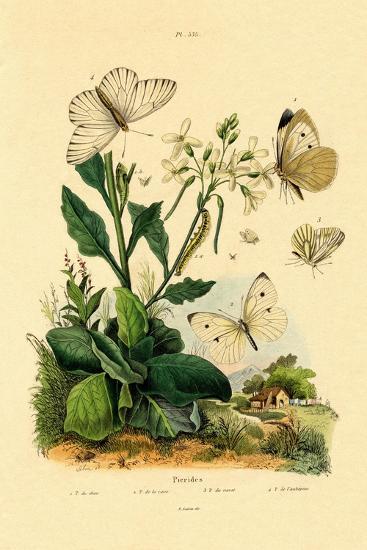 Large White, 1833-39--Giclee Print