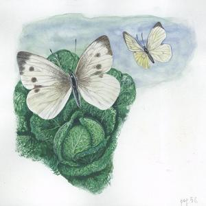 Large Whites or Cabbage Butterflies Pieris Brassicae