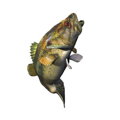 Largemouth Bass--Art Print