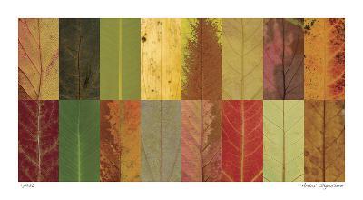 Lark Creek I-John Watson-Giclee Print