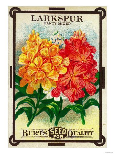 Larkspur Seed Packet-Lantern Press-Art Print