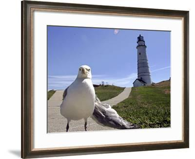 Larry, a Seagull--Framed Photographic Print